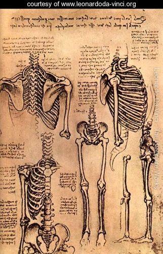 Drawing-of-the-Torso-and-the-Arms_leonardo da vinci