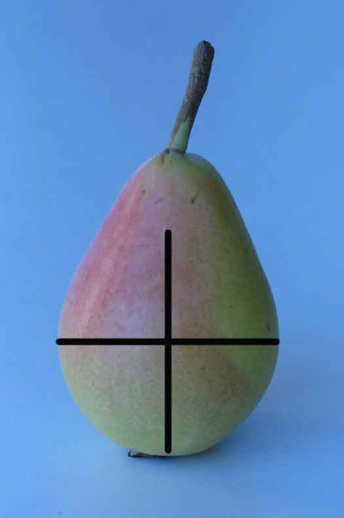 Pear-with-guidelines_