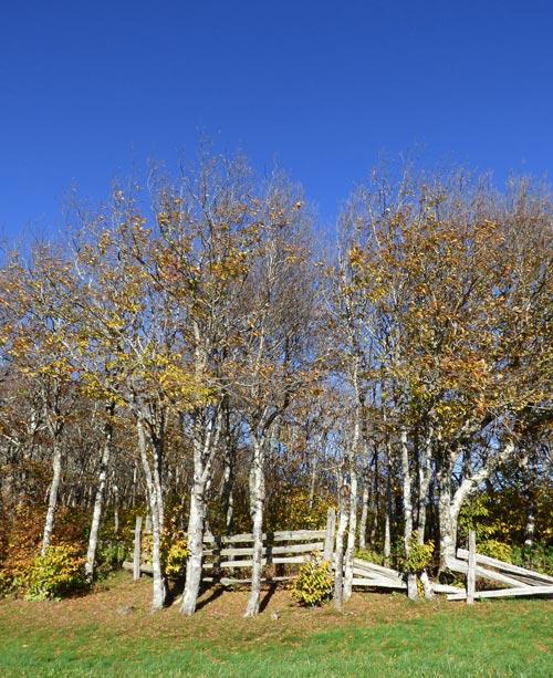 Fall_trees_fence_2_