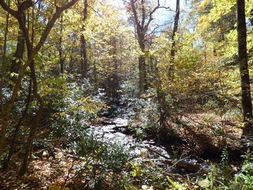 Fall_stream_7_