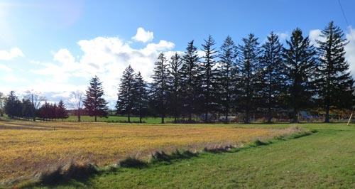 Fall_field_13_