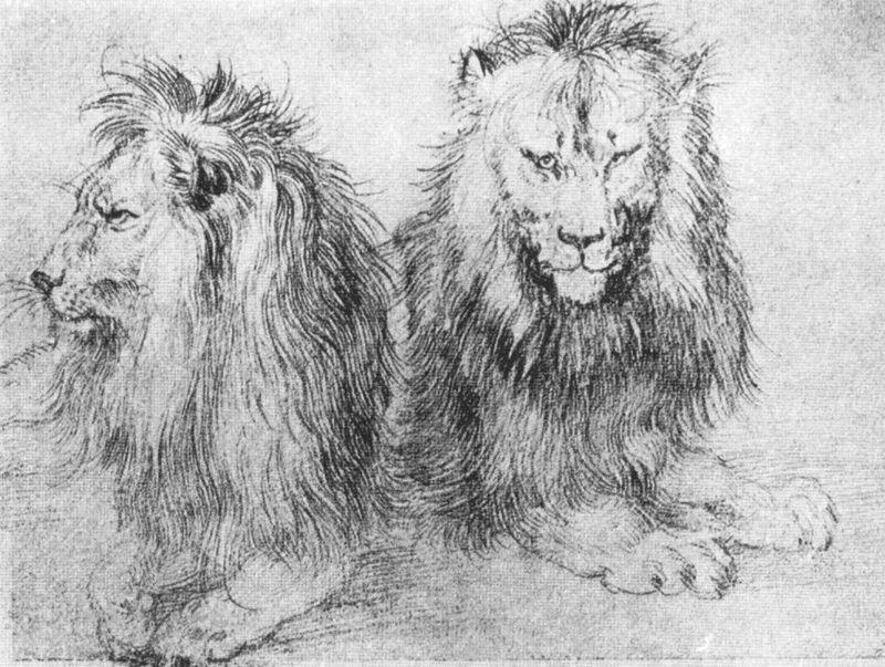 Durer_lions_(sketch)